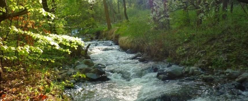 """РИОСВ взе проби от пречиствателните станции на """"Биовет"""" и Пещера за мъртвата риба в Стара река"""