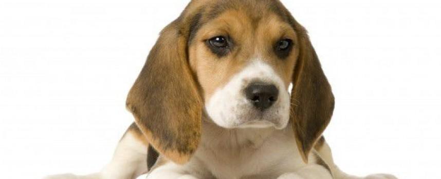 Време за литература: Куче
