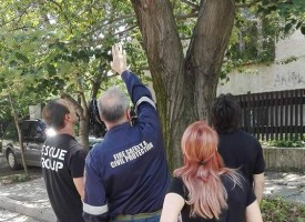Пожарникари свалиха котка от дърво
