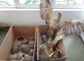 РИОСВ и полицията в Пазарджик задържаха препарирани и незаконно отглеждани защитени  животни