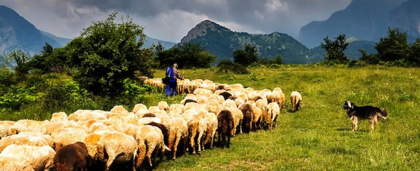 Ето колко животни можем да отглеждаме в Пазарджик и селата