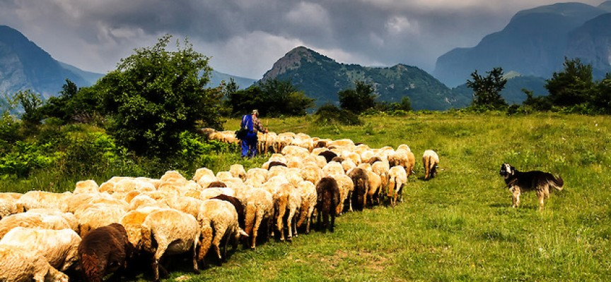 Двама крадци на овце спипаха във Велинград