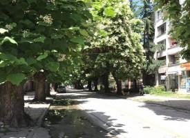 """Искаме ремонт на """"Ал.Стамболийски"""", но и да спасим здравите дървета"""