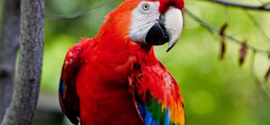 """Научи новите правила за търговия с папагали от вида """"Жако"""""""
