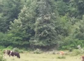 На вниманието на РИОСВ и отделите по Екология: Ромски бригади секат клони от липи край Пещера и Брацигово