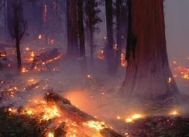 За седмица: 36 пожара на сухи треви и гора, бъдете внимателни в жегата