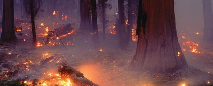 В жегите: Полицията напомня – опасността от пожари е огромна, пази гората