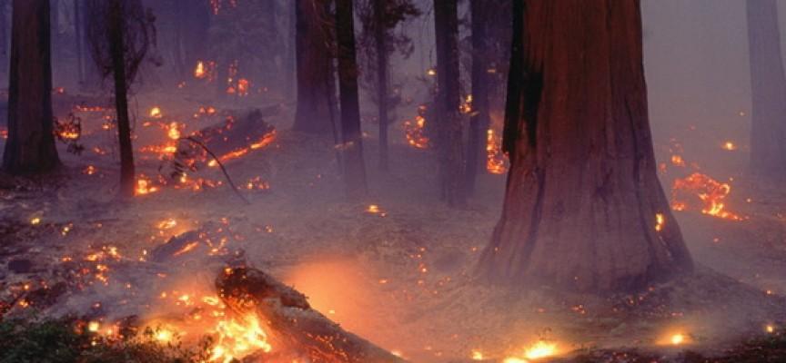Настъпи сезонът на пожарите, хора, бдете