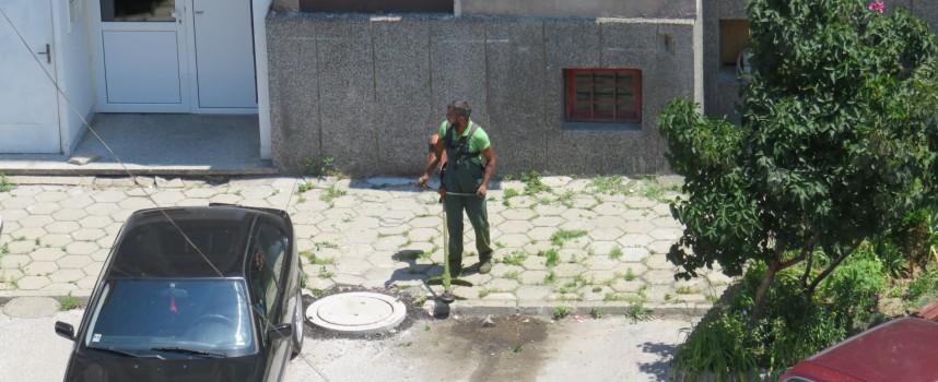 "Почистиха тревите по тротоарите и междублоковите пространства на ""Янтра"" и ""Криволак"""