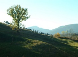 Велинград: Горски стражари ще следят за бракониери на дървесина и дивеч