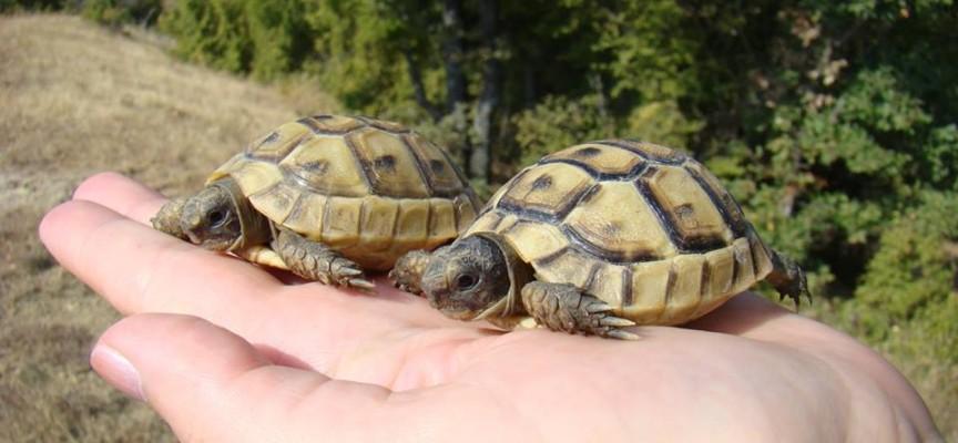 Седем шипобедрени костенурки и три щъркела бяха спасени от екоинспектори