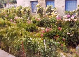 """Вход за пример: 1000 рози в кампанията за """"По-чист, по-красив и цветен Пазарджик"""""""
