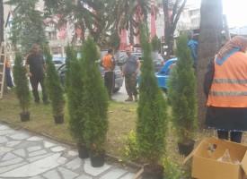 Велинград: Разкрасяват с туи и каскадни цветя центъра