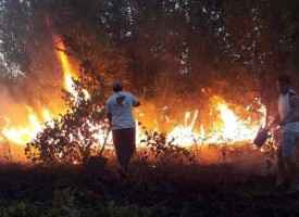 За седмица: 25 пъти горяха сухи треви, ето какво не трябва да правим