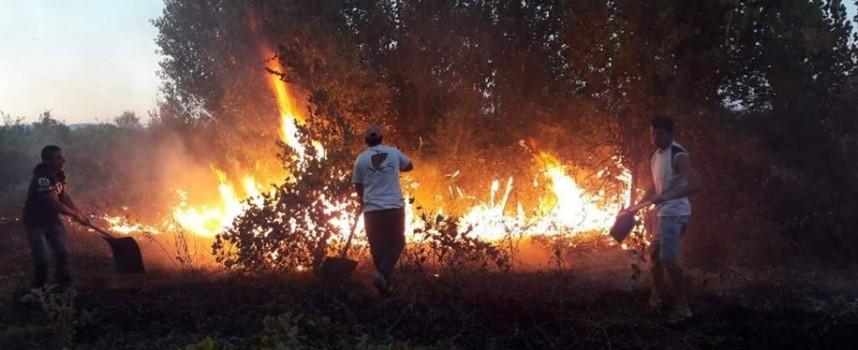 20 декара пшеница и два декара орехова градина изгоряха край Црънча