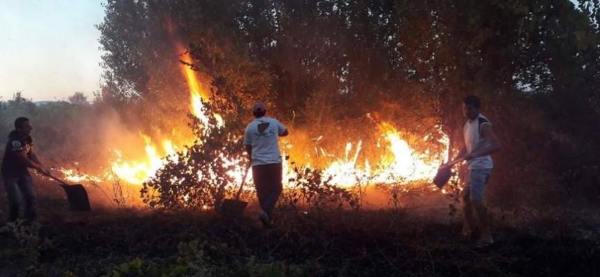 До 2000 лв. глоба за неумишлен пожар в гората или полето, внимавайте!