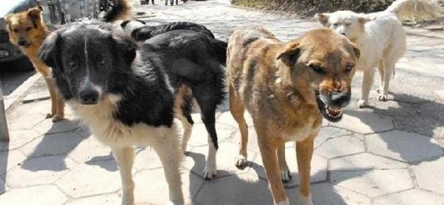 Докараха ни нови бездомни кучета