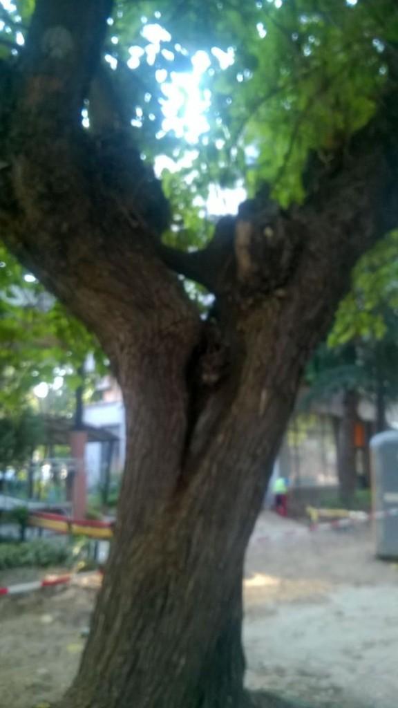 16дърво