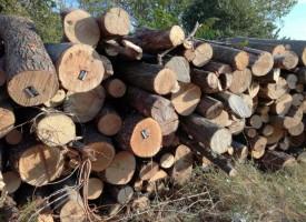 Пази гората: Как да познаем дали има незаконна сеч?