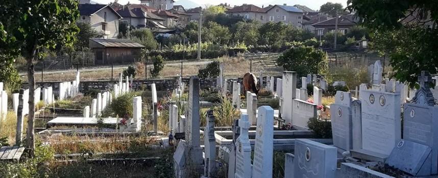 """Велинград: Коне върлуват в гробището на кв. """"Каменица"""""""