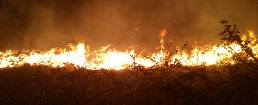 500 дка лозя и сухи треви горяха снощи край Карабунар