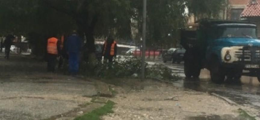 Дъждът потроши клони в различни краища на Пазарджик