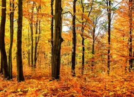 Октомври: От 0 до 25 градуса, започва със слънце и свършва със сняг