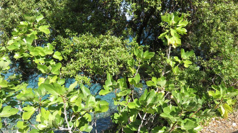 03море и маслини