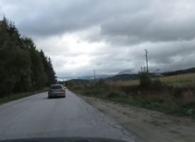 Коне пресрещат колите по пътя Цигов чарк – Батак, шофирайте внимателно