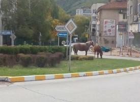 Пещера: Безстопанствени коне бродят по пътищата, умъртвиха три, хуманно