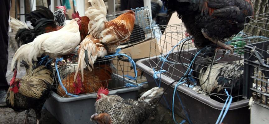 Край на хайван пазарите в Пазарджик и общината
