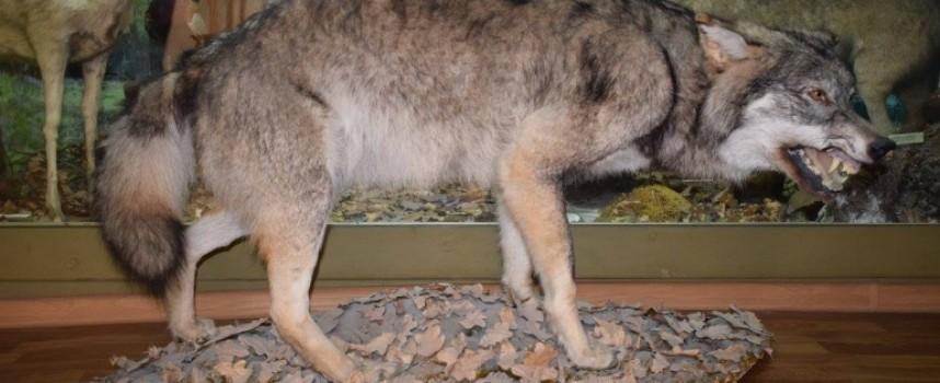 Панагюрище реновира природонаучния отдел в музея