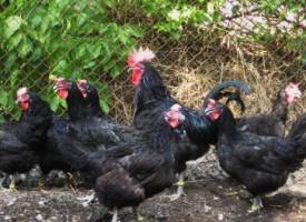 При 10 градуса под нулата: Гражданите се тюхкат за климатика, на село за кокошките