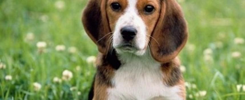 Dog policeman: Кучето Джейк предотврати незаконен износ на цигари, вижте как