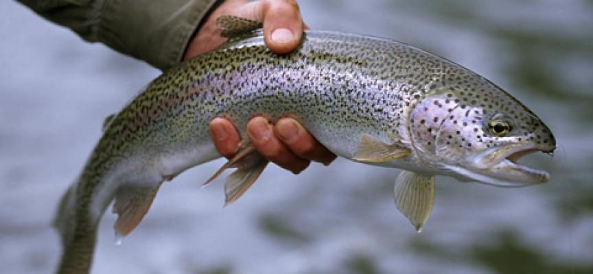 Агенцията по рибарство дава съвети за риба – първа преснота