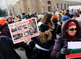 """Министър Димов уважи протеста на """"Четири лапи"""" лъвчетата няма да дойдат в Пазарджик"""