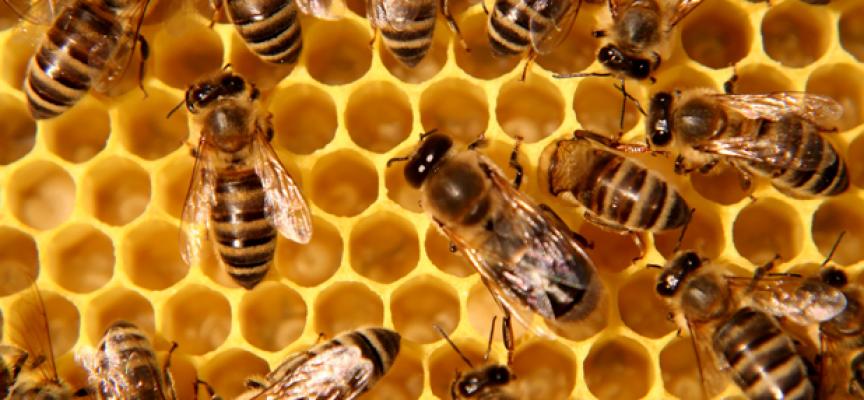 """Биопродукти и пчелен мед ще се предоставят по схемите """"Училищен плод"""" и """"Училищно мляко"""""""