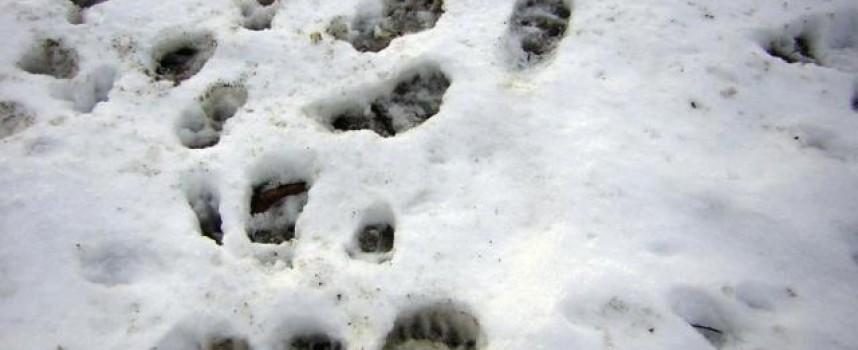 Мечка броди по улици и къщи в Стойките, мецана се лута и около Атолука