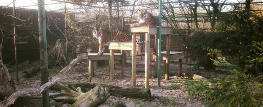 Вижте условията в центъра в Холандия, където искат да изпратят лъвчетата