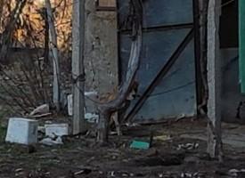 Перничанка иска да осинови питбула – убиец