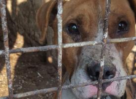 Петиция за спасяването на кучето Цезар тръгна във фейсбук