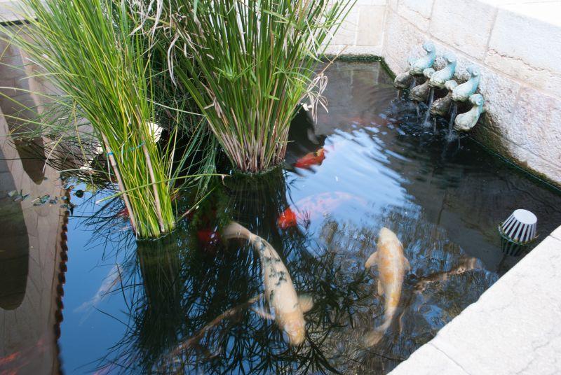 10шаранови риби