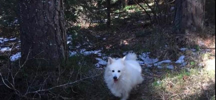 Откриха кучето – партизанин на Атолука, вече е у дома