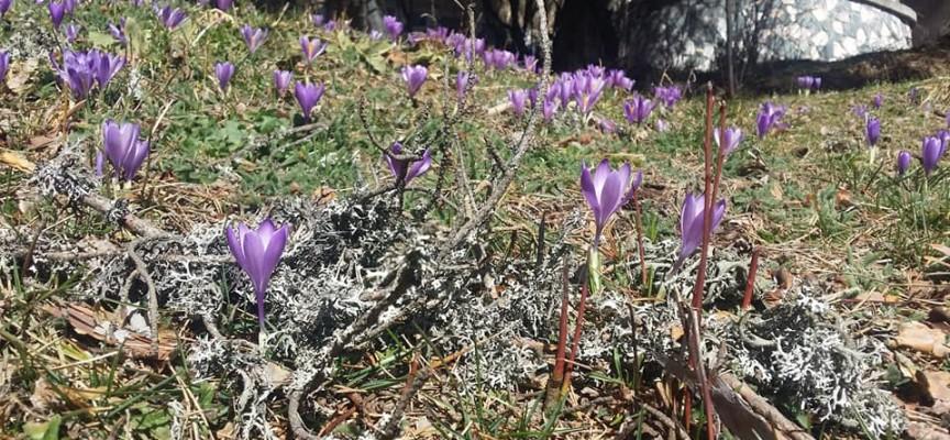 """Съботни маршрути: На """"лов"""" за сини минзухари на Атолука"""