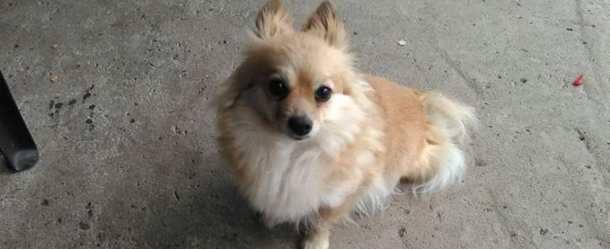 Wanted: Малко кученце изчезна в Мокрище