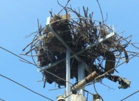 195 нови платформи за щъркелови гнезда постави ЕВН