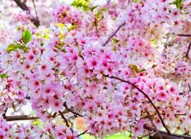 """Жега през април: Според """"Синоптик"""" – 31 градуса, според станция Ивайло – 29 градуса в Пазарджик"""