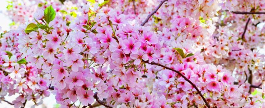 Утре: По-топло от днес, на Великден – слънце и дъжд