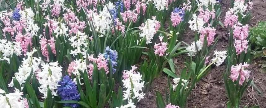 Деца се включиха в кампанията за Митко, продават цветя от бабината градина, купете си