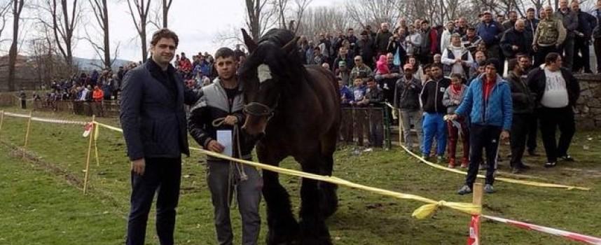 Стрелча: 46 участника се състезаваха в последния ден на март в конните надбягвания
